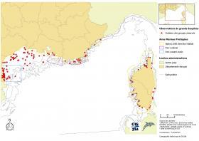 Répartition des observations de Grands Dauphins réalisées au cours de GDEGeM